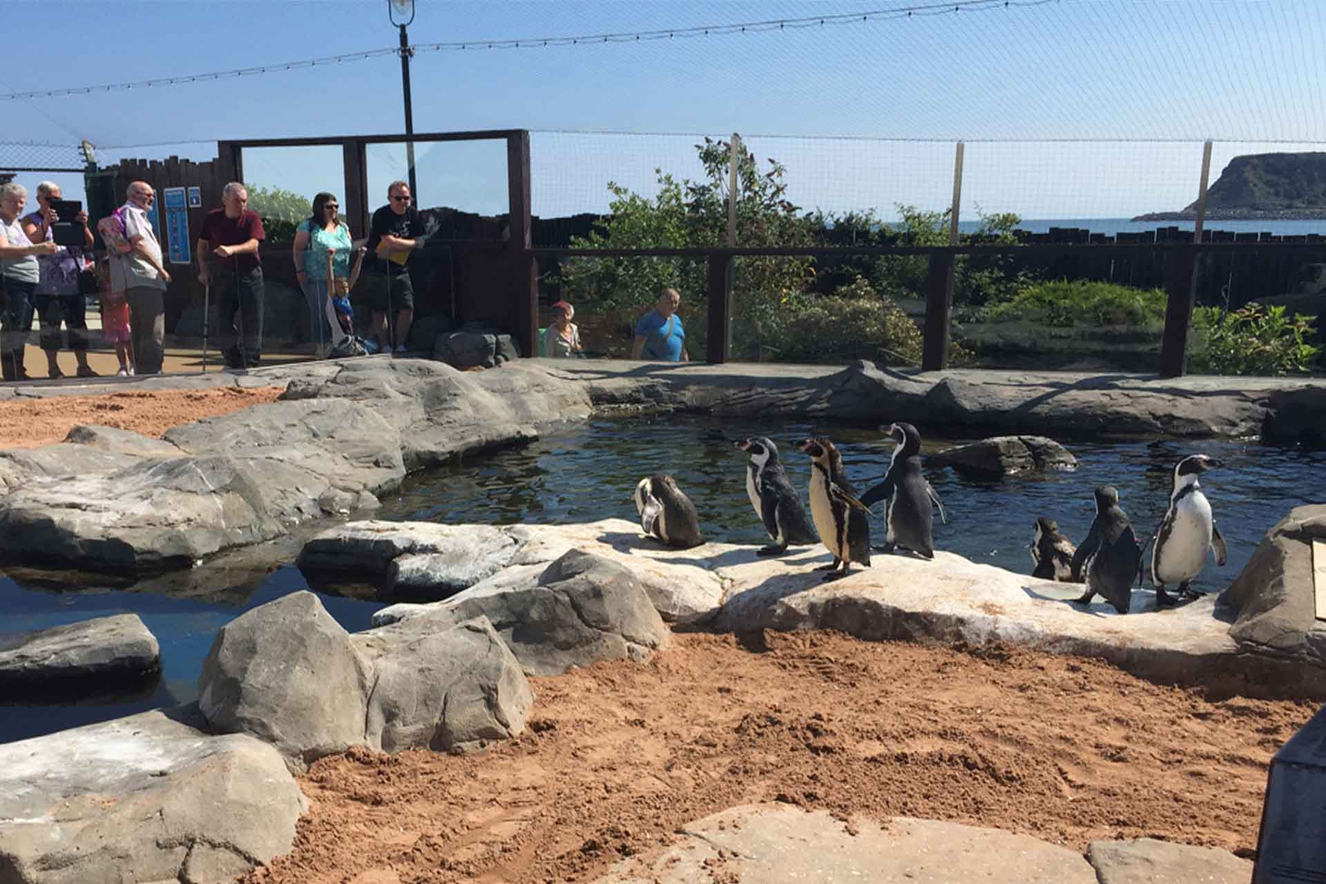 Penguin Island at SEA LIFE Scarborough