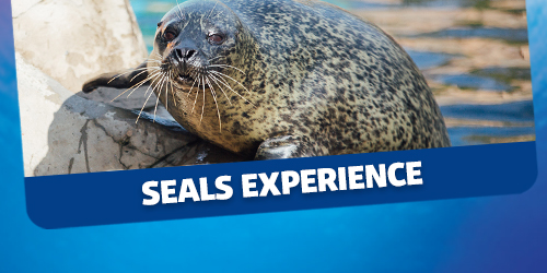 Breakfast with the seals experience at SEA LIFE Scarborough
