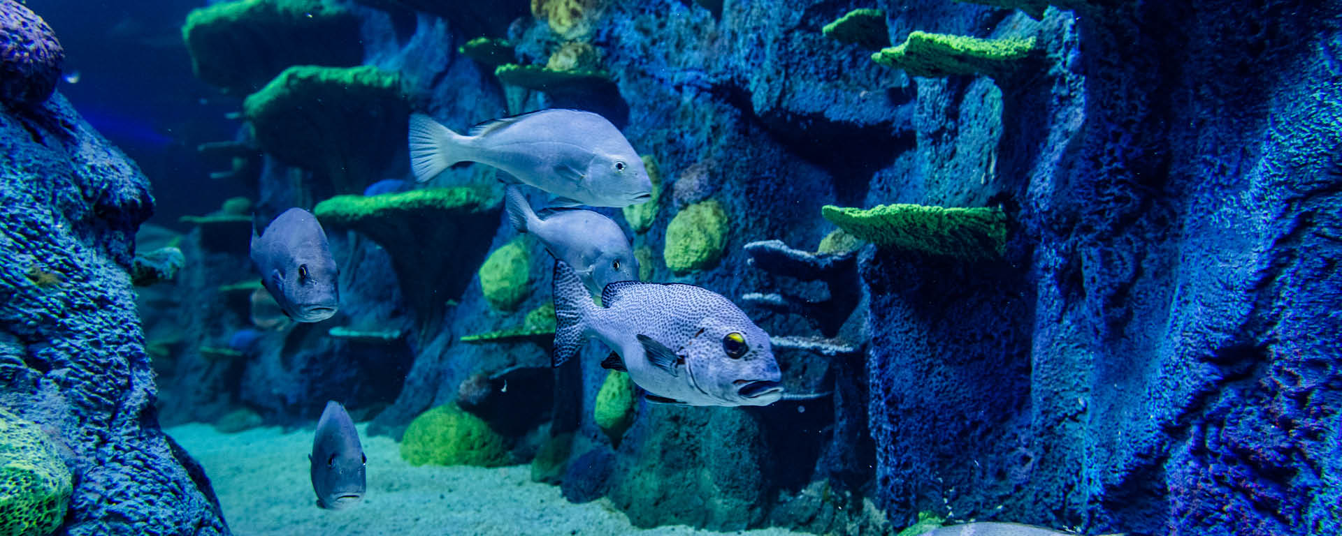 Reef Fish In Day And Night