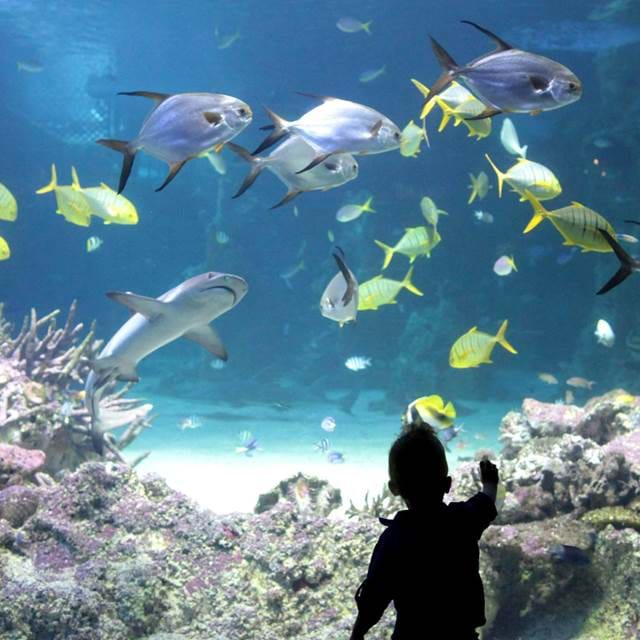 Child in front of a fish tank