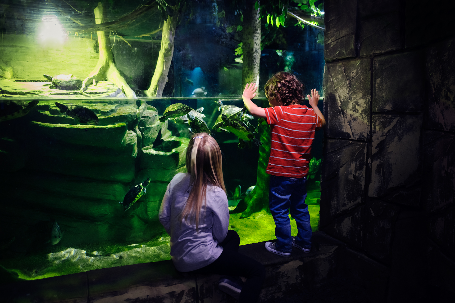 Children At Turtle Tank