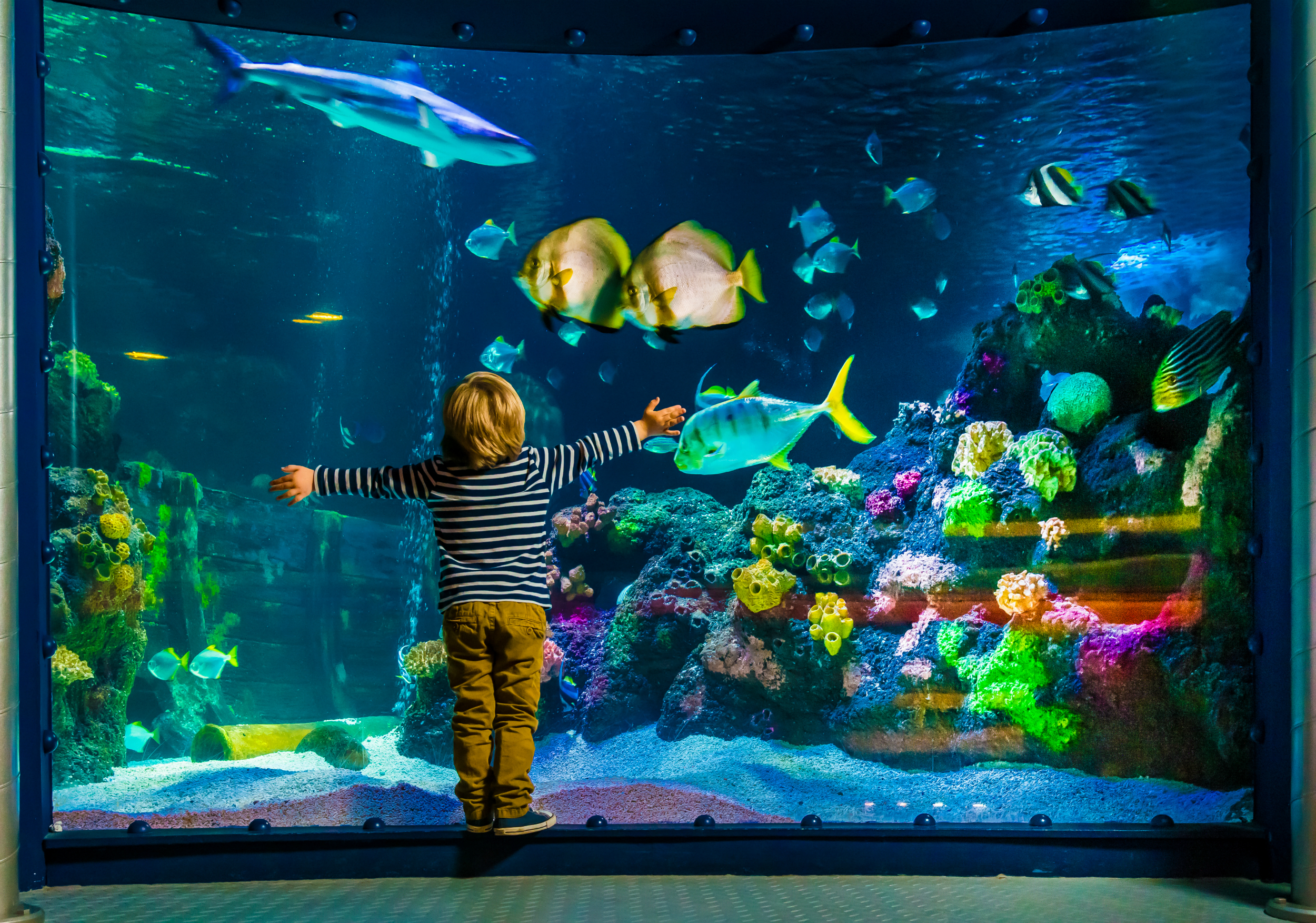 Child In Front Of Aquarium