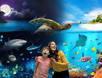 Discover our ocean by night and day at SEA LIFE Weymouth