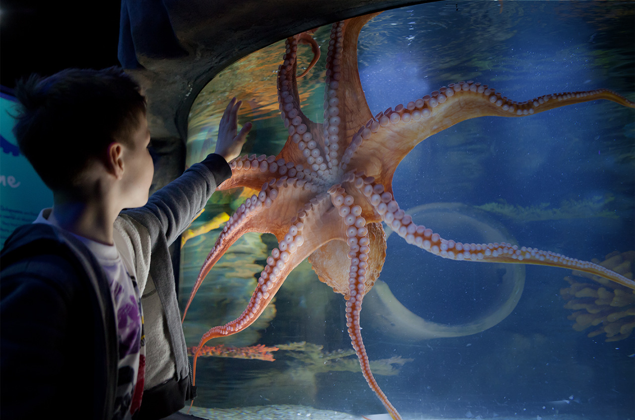 Boy touching the octopus tank at SEA LIFE