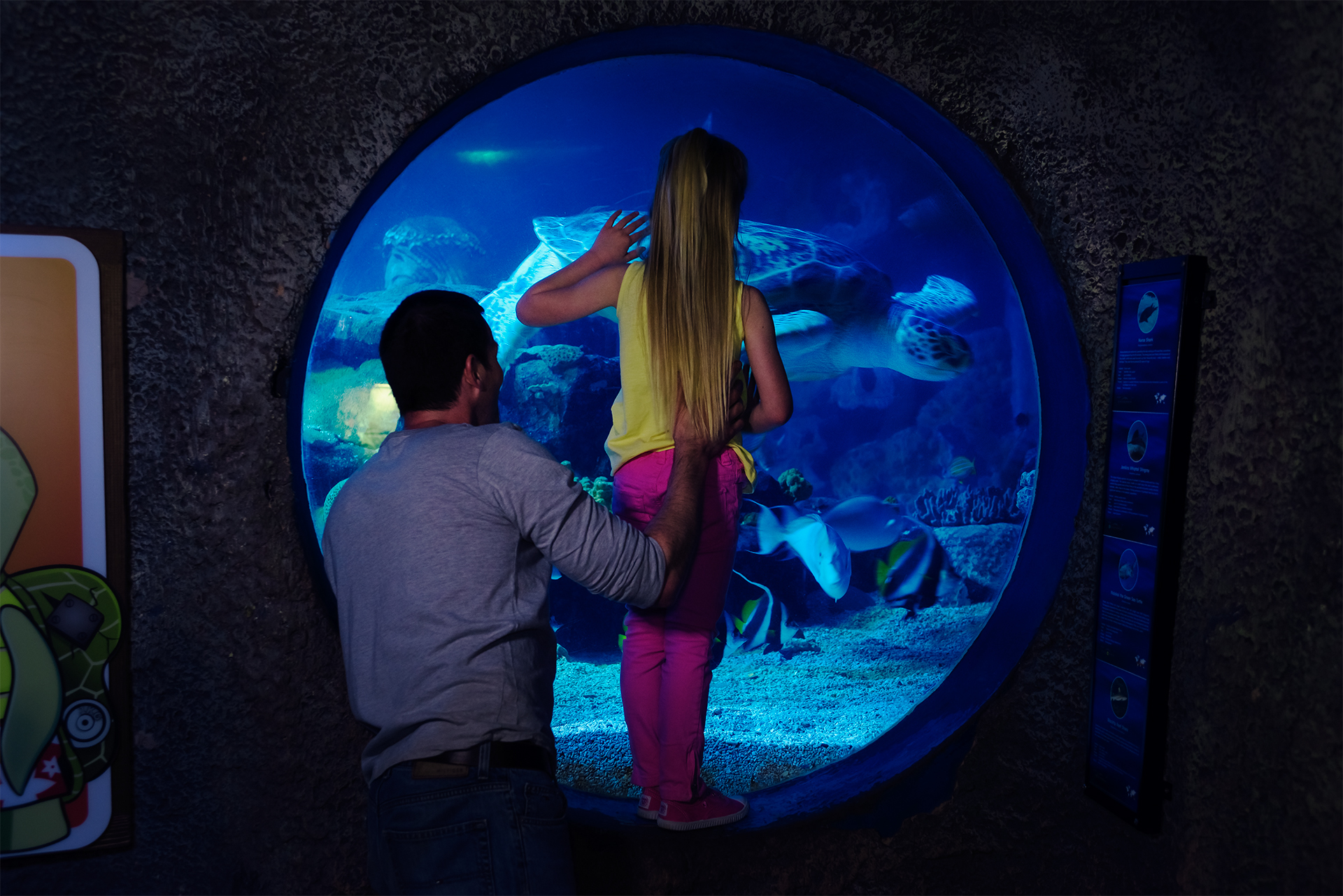 Father And Daughter Looking At Turtles at SEA LIFE